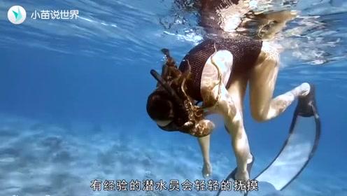 """潜水被大章鱼死死""""抱住"""",甩也甩不掉,镜头记录下这搞笑一幕"""