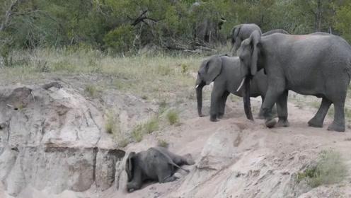 自然界流行散养带娃?大象表示毫无压力,北极熊第一个不同意