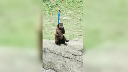 就这只猴子的长相,像极了我的前男友,简直就是一个模子出来的!