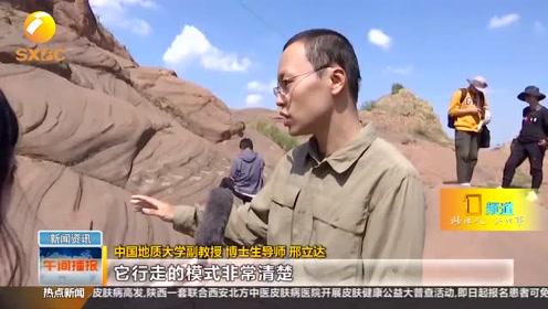 榆林靖边县惊现恐龙足迹化石