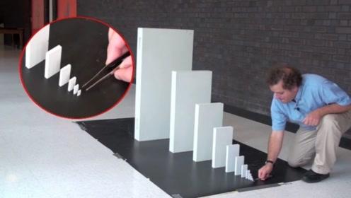 指甲盖大的多米诺骨牌,能推倒大几万倍的骨牌吗?一起来见识下