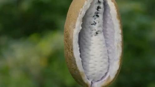 """一到8月就会""""炸""""开的水果,酸酸甜甜的,你们那里叫它啥?"""
