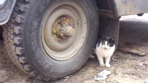 狡猾老鼠躲在轮胎上,以为可以戏弄猫咪一次,下一秒肠子都悔青了