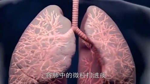 吸烟的人戒烟了,肺部能变回正常吗?答案让很多人不敢信!