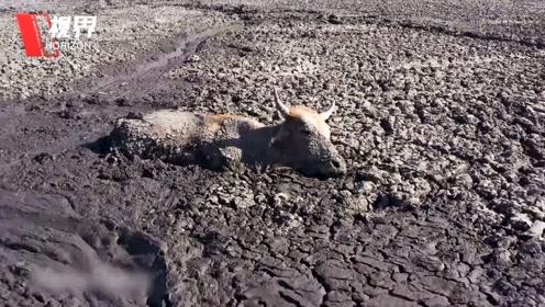 震撼航拍即将干涸的非洲恩加米湖 数百动物挤在最后的泥潭中等死