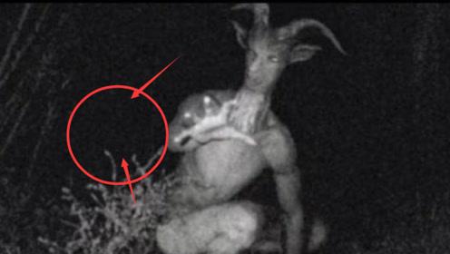 """山林中出没的""""美国山羊人"""",有诡异能力,究竟是什么物种?"""