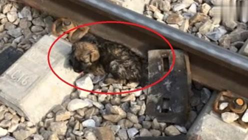 男子路过铁道时,发现流浪狗趴在铁轨等死,好在遇到好心人!