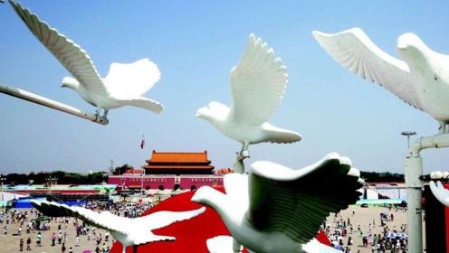 一到国庆阅兵,10万鸽子飞向了天安门,最后都落到了哪里?