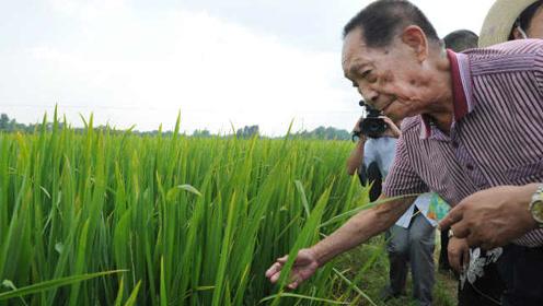 """""""稻圣""""袁隆平:稻田里走出来的天王巨星,让你的碗里有饭吃"""