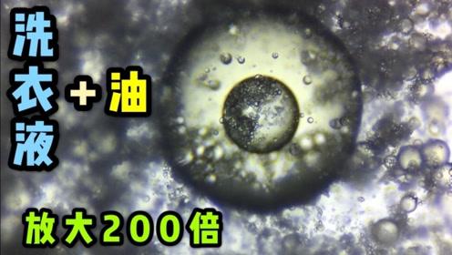 用显微镜放大洗衣液能看见什么?顺便加点菜油进去