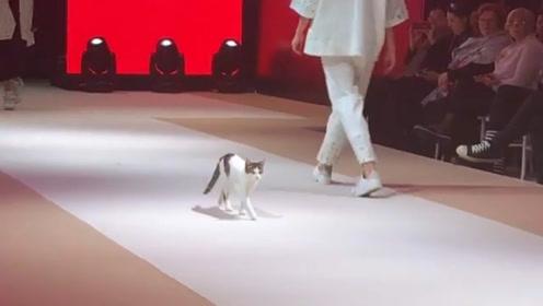 """猫咪误闯模特时装秀,大秀真正""""猫步"""",镜头记下全过程!"""