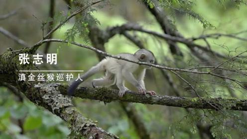 滇金丝猴保护神—张志明