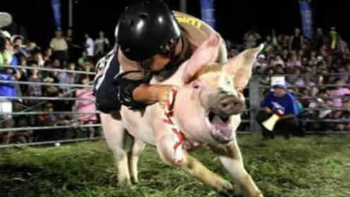 日本独创骑猪大赛,参赛着糗样才是第一关注点,网友:是他们风格