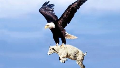 6种世界上最危险的鸟类!