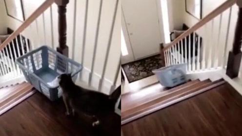 懒猫办法多 宠物猫偷懒坐洗衣篮滑下楼梯