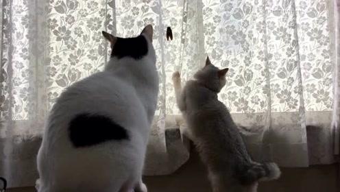 创意遛猫法,夏天逮个知了遛猫效果不是一般的好!