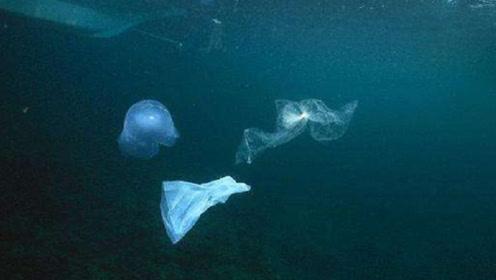 海洋专家在海底发现白色物体,专家表示:人类要注意了