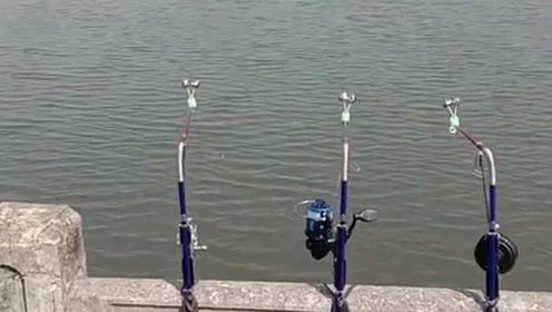 放了好几杆,还有这么溜的操作,真是钓鱼的最高境界!