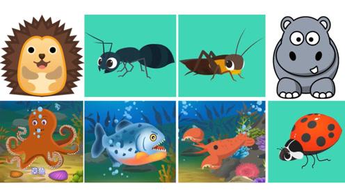 快乐英语记单词小动物可爱昆虫海洋生物英语单词快乐学习
