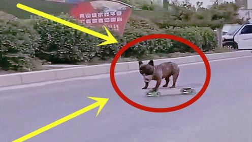 男子带狗狗上公路玩滑板,聪明狗狗秒就学会,后面却碰见了交警!