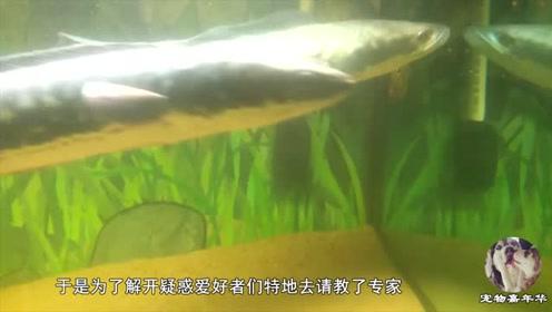 """蛇头鱼入侵?我国多地出现""""蛇头鱼"""",专家:因水质变好才出现"""