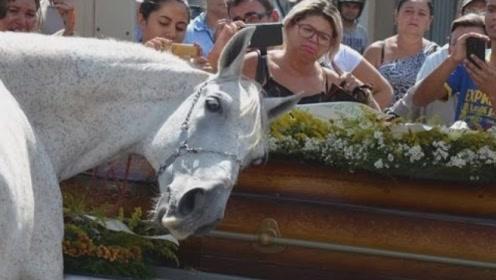 主人去世,心爱的马前来参加葬礼,接下来的一幕让人出乎意料!