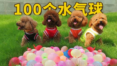 当4只狗遇上100只注水气球,一爪爆一个:玩水,我们是专业的!