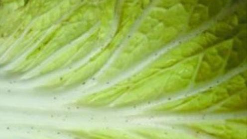 吃了这么多年大白菜,你知道白菜上的黑点是什么吗?看专家怎么说