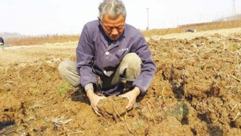 """老农在地里挖出大量葫芦,闻到味道好奇打开,竟意外发现""""惊喜"""""""