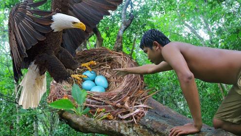男子野外进攻老鹰巢,镜头记录惊险一幕,看完头皮发麻!