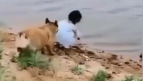 狗子发现小姑娘有危险,用嘴叼走小姑娘,原来只是为了捡它?