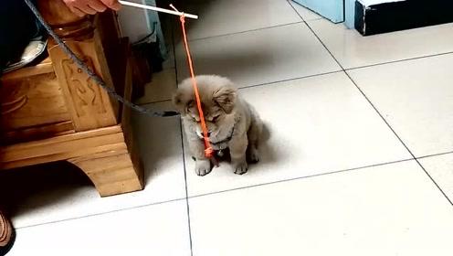 萌宠 土狗:人家钓鱼,你吊狗,主人你长点心吧!