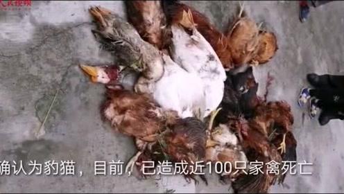 """破案了!农家圈舍数百只家禽相继死亡 背后""""凶手""""身份确认"""