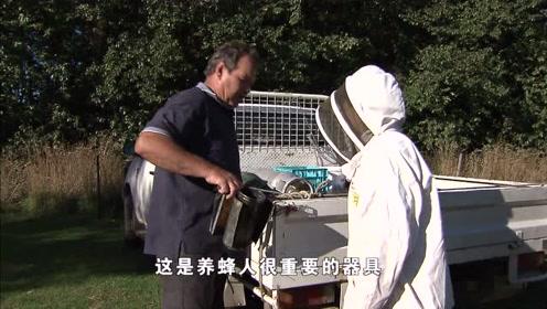 见蜜蜂第一步最好保护措施,利用烟熏让蜜蜂安静下来,学到一招!