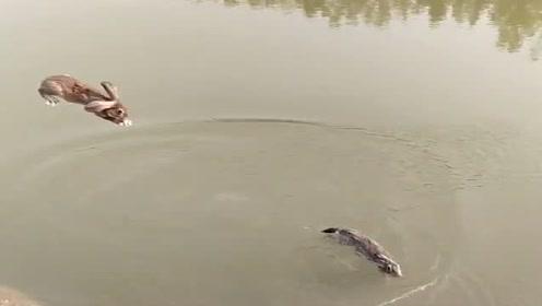 家里养的兔子已经一个月没洗澡了,直接把它们扔在河里泡澡,太方便了!