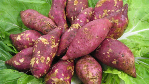 红薯保存方法好简单,放很久也不烂不发芽,越放越甜,快来看看
