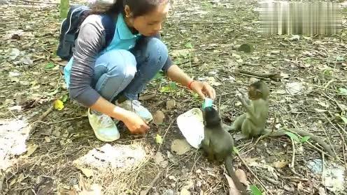 小猴子没有妈妈独自找食物吃,小姐姐给他牛奶喝,却老是被人抢