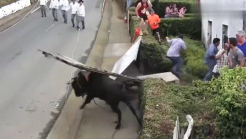 公牛发起怒来真可怕!安全围栏一头被撞烂,老外一哄而散!
