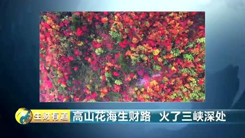 重庆巫溪:高山花海生财路 火了三峡深处视频