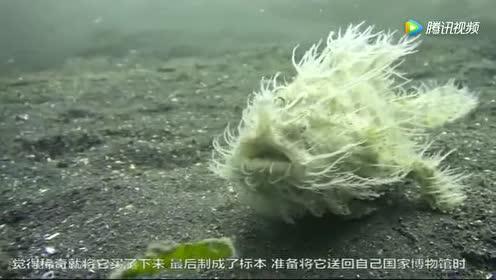 这种鱼竟然浑身长满白毛!最老的渔民也没见过!