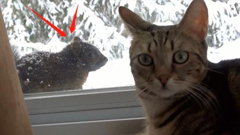 当猫咪与松鼠相遇会发生什么?注意看喵星人的反应,主人被逗得开怀大笑
