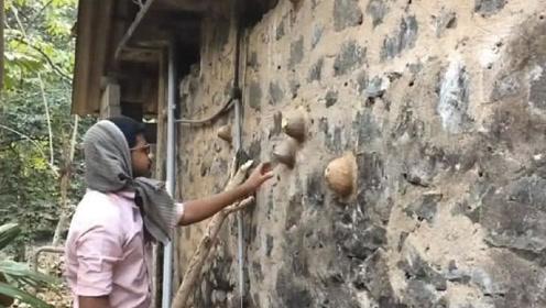 """小伙看到墙壁上长了几个""""包"""",拿棍子一戳,差点被村民痛打"""