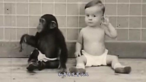 专家做一实验,让猩猩和婴儿一起长大,9个月后专家连忙终止实验