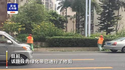 深圳中学生过斑马线被撞,交警回应网友质疑:绿化带植被影响视线