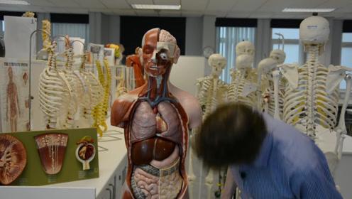 人体要是少一个肾,生活会受影响吗?专业医生说出答案!