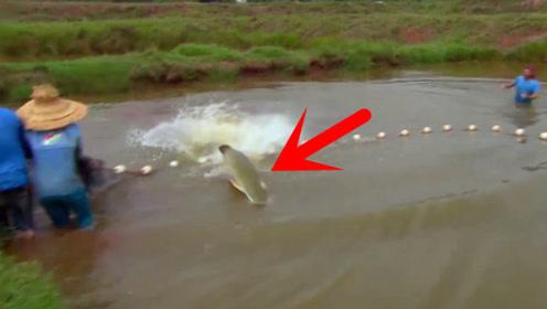 池塘捕鱼意外抓到凶猛大鱼,吓得众人不敢靠近,这是啥鱼?