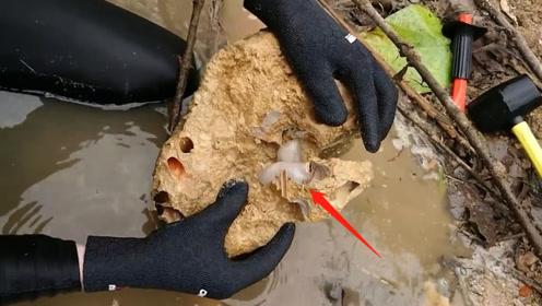 """专家发现""""新生物"""",靠吃石头为生,如今却有一个很担心的大问题!"""