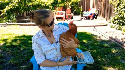 鸡的寿命有多长?如果一直养下去,时间超出你的想象!