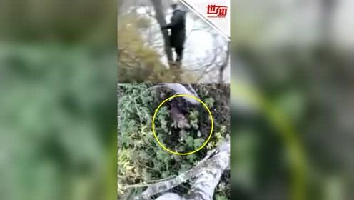 捕鱼时遭到熊猛烈追击 俄渔民爬树逃生不忘拍视频