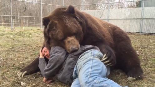 男子躺在棕熊怀里睡觉,下一秒,意外发生了,网友:性情难测啊